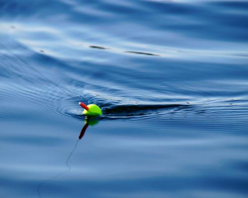 Fishing bobber in the water