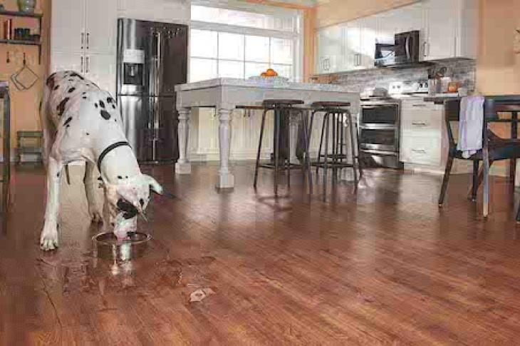 Top flooring innovation and trends